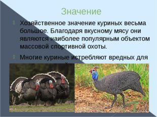 Значение Хозяйственное значение куриных весьма большое. Благодаря вкусному мя