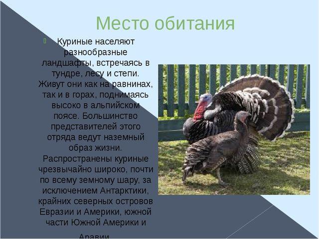 Место обитания Куриные населяют разнообразные ландшафты, встречаясь в тундре,...