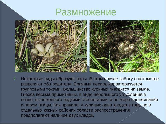 Размножение Некоторые виды образуют пары. В этом случае заботу о потомстве ра...