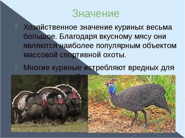 Значение Хозяйственное значение куриных весьма большое. Благодаря вкусному мя...