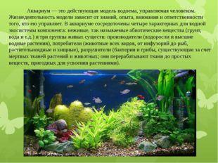 Аквариум — это действующая модель водоема, управляемая человеком. Жизнедеяте