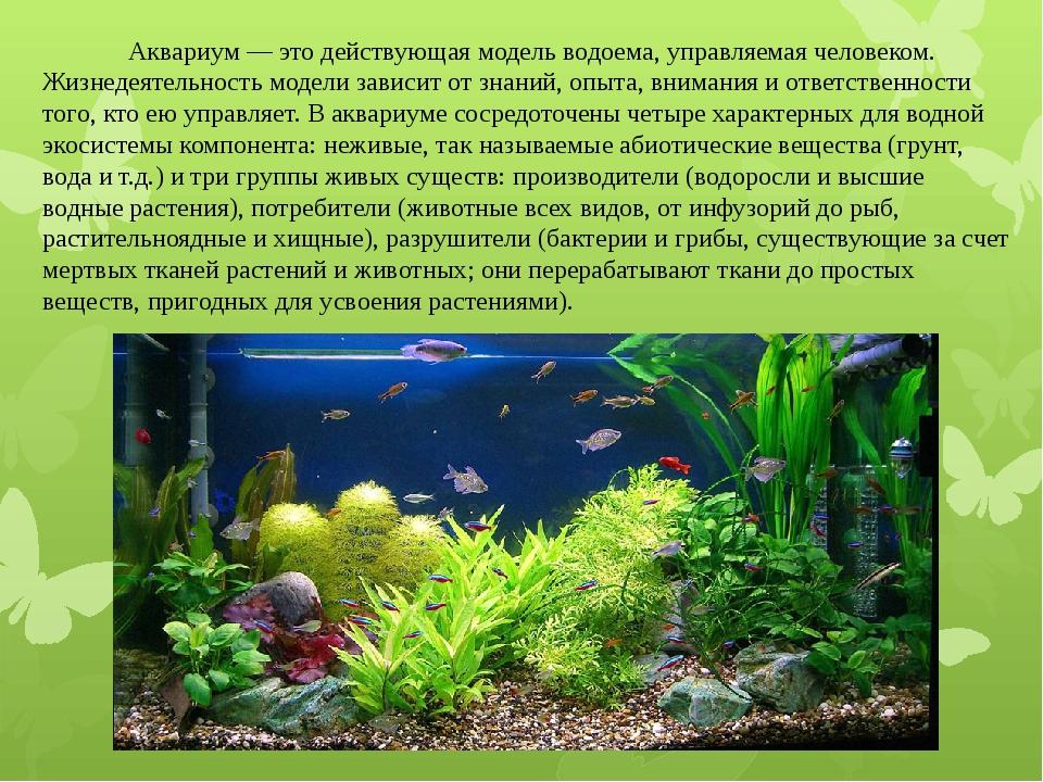 Аквариум — это действующая модель водоема, управляемая человеком. Жизнедеяте...
