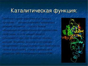 Каталитическая функция: Наиболее хорошо известная роль белков в организме — к