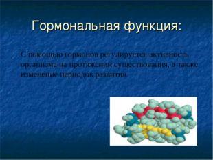 Гормональная функция: С помощью гормонов регулируется активность организма на