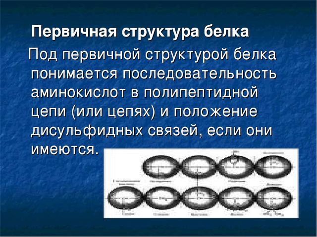 Первичная структура белка Под первичной структурой белка понимается последов...
