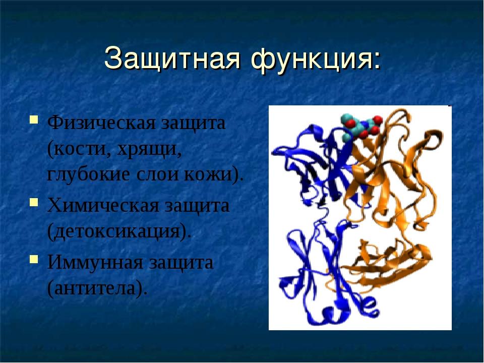 Защитная функция: Физическая защита (кости, хрящи, глубокие слои кожи). Химич...