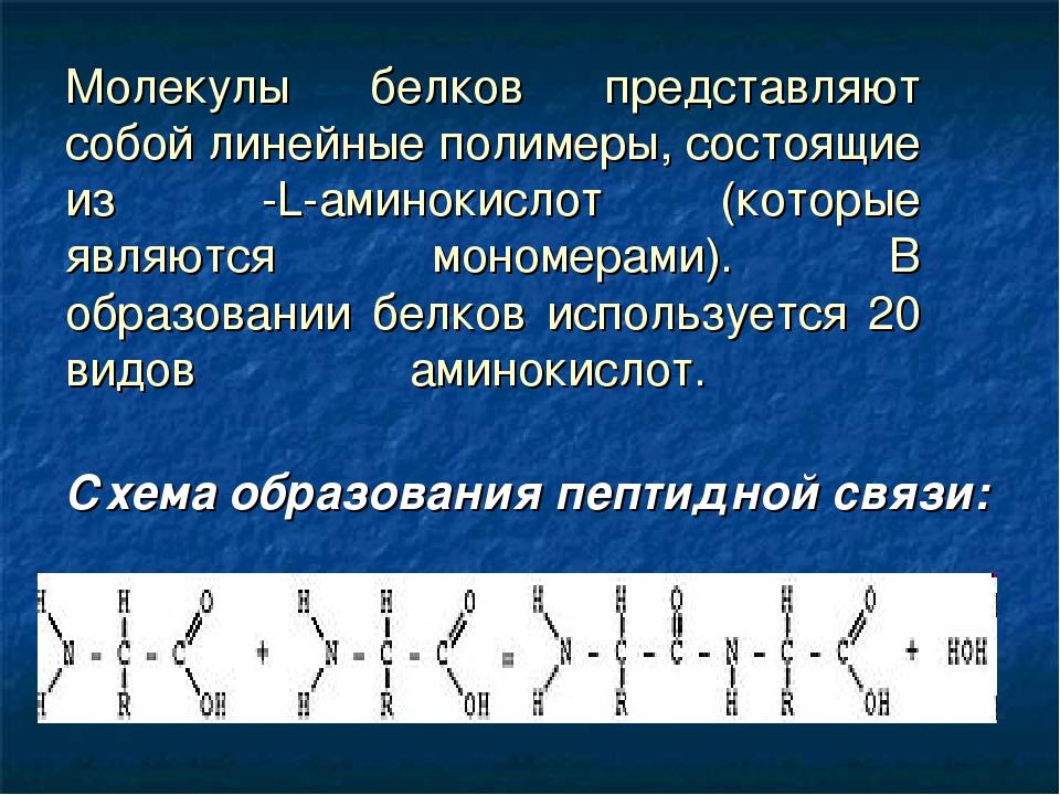 Молекулы белков представляют собой линейные полимеры, состоящие из α-L-амино...