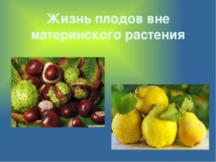 Жизнь плодов вне материнского растения