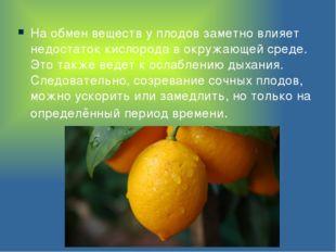 На обмен веществ у плодов заметно влияет недостаток кислорода в окружающей ср