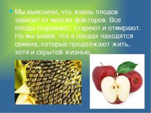 Мы выяснили, что жизнь плодов зависит от многих факторов. Все плоды созревают
