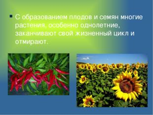 С образованием плодов и семян многие растения, особенно однолетние, заканчива