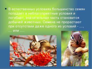 В естественных условиях большинство семян попадает в неблагоприятные условия