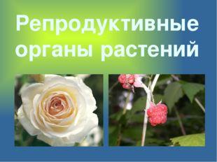 Репродуктивные органы растений