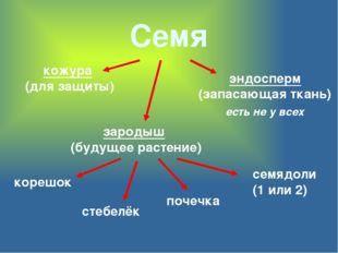 Семя кожура (для защиты) эндосперм (запасающая ткань) зародыш (будущее растен