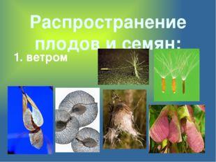 Распространение плодов и семян: 1. ветром