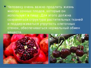 Человеку очень важно продлить жизнь многих сочных плодов, которые он использу