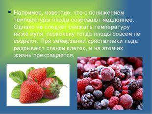 Например, известно, что с понижением температуры плоды созревают медленнее. О