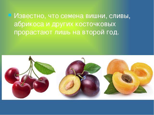 Известно, что семена вишни, сливы, абрикоса и других косточковых прорастают л...