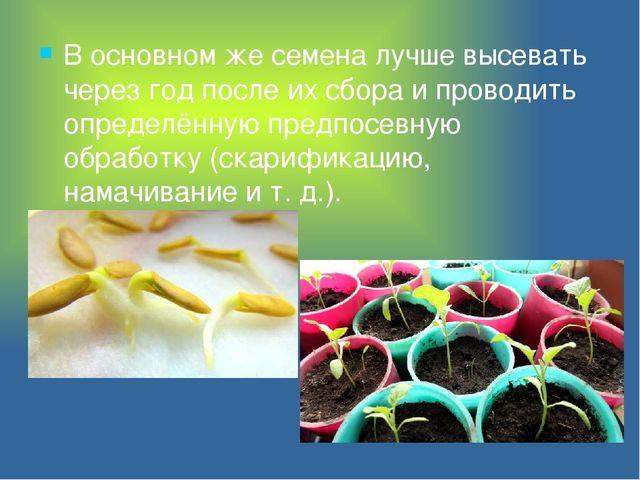 В основном же семена лучше высевать через год после их сбора и проводить опре...