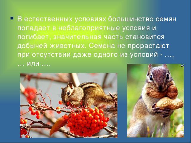 В естественных условиях большинство семян попадает в неблагоприятные условия...