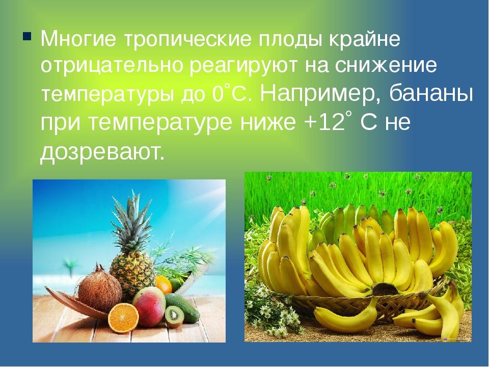 Многие тропические плоды крайне отрицательно реагируют на снижение температур...