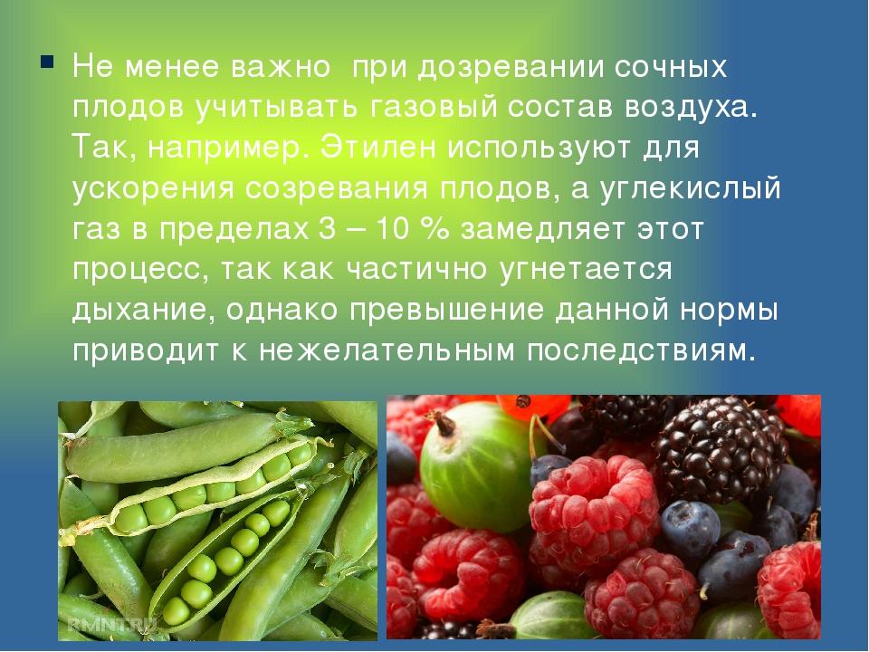 Не менее важно при дозревании сочных плодов учитывать газовый состав воздуха....