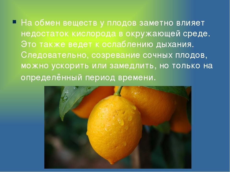 На обмен веществ у плодов заметно влияет недостаток кислорода в окружающей ср...
