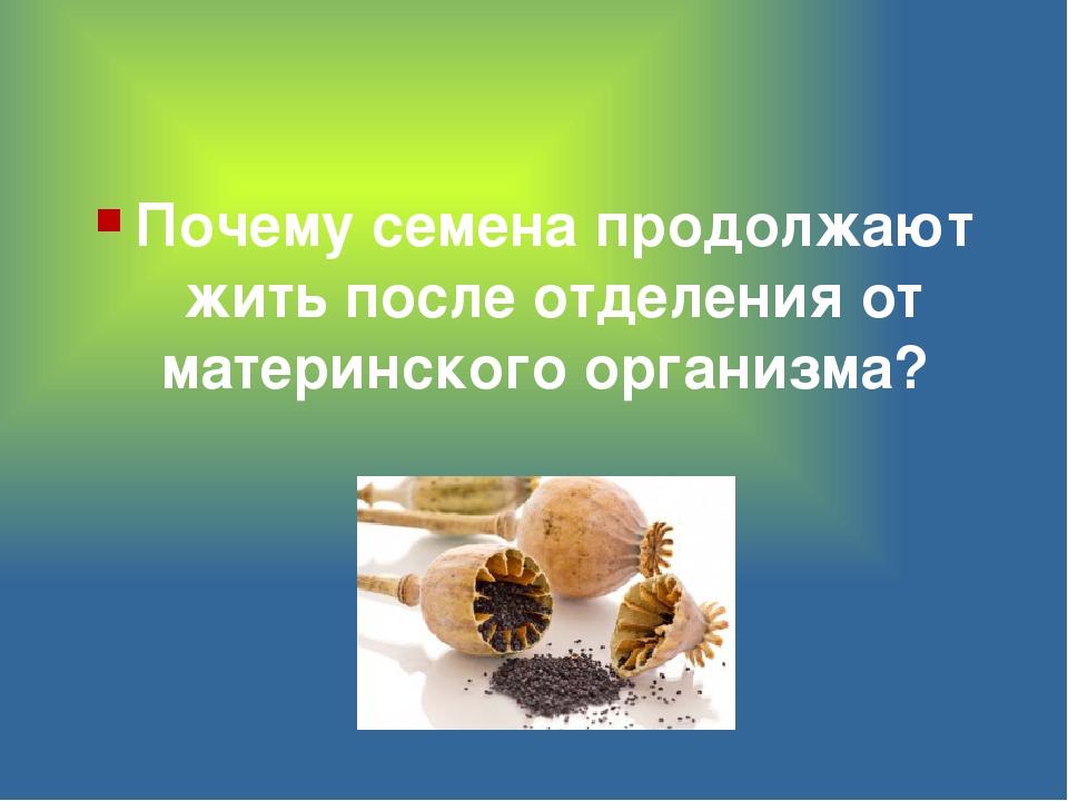 Почему семена продолжают жить после отделения от материнского организма?