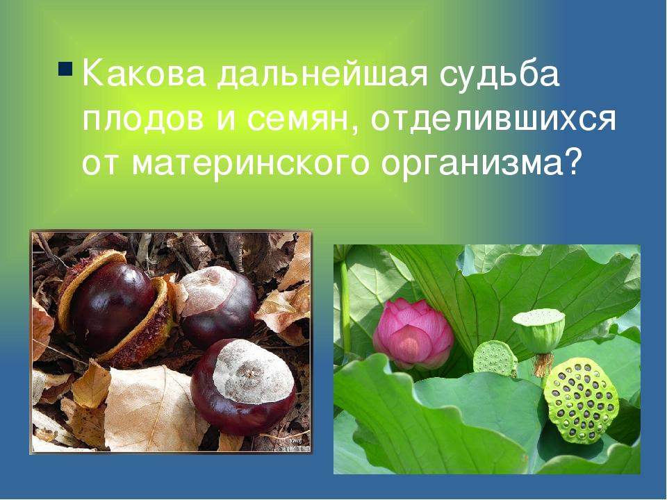 Какова дальнейшая судьба плодов и семян, отделившихся от материнского организ...