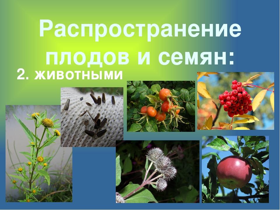Распространение плодов и семян: 2. животными