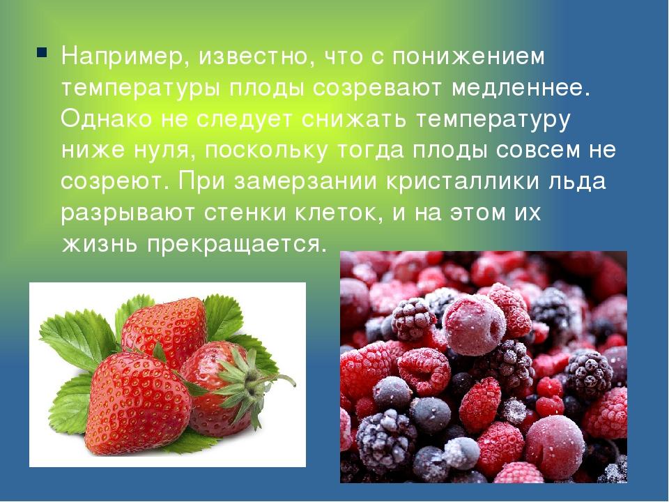 Например, известно, что с понижением температуры плоды созревают медленнее. О...