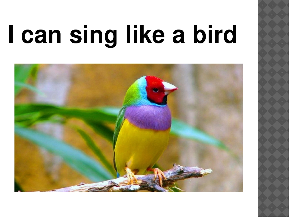 I can sing like a bird