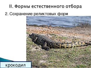 2. Сохранение реликтовых форм крокодил