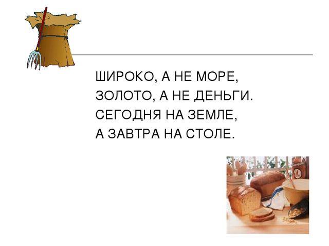 ШИРОКО, А НЕ МОРЕ, ЗОЛОТО, А НЕ ДЕНЬГИ. СЕГОДНЯ НА ЗЕМЛЕ, А ЗАВТРА НА СТОЛЕ.