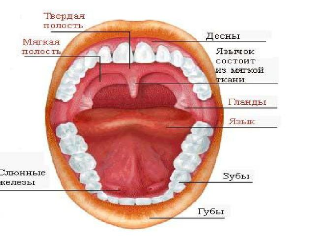 снг рот и зубы картинка названия яизиологии калашникова