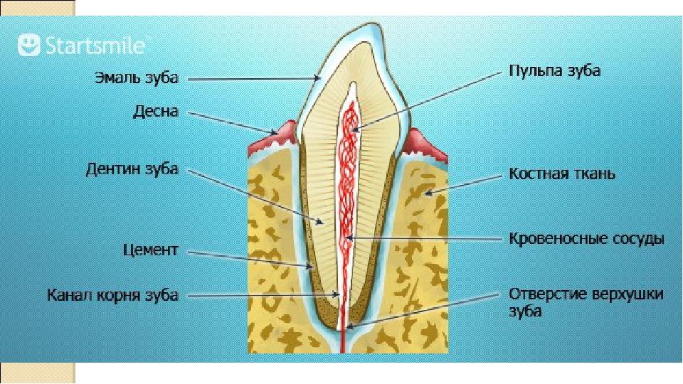 Что будет с зубом если убить нервы