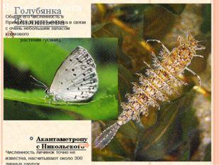 Численность личинок точно не известна, насчитывают около 300 линных шкурок. Г