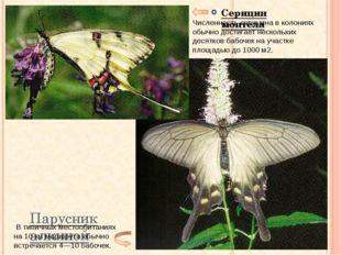 Парусник алкиной Серицин монтела Численность серицина в колониях обычно дости