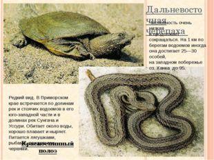 Дальневосточная черепаха Красноспинный полоз Численность очень низкая и продо