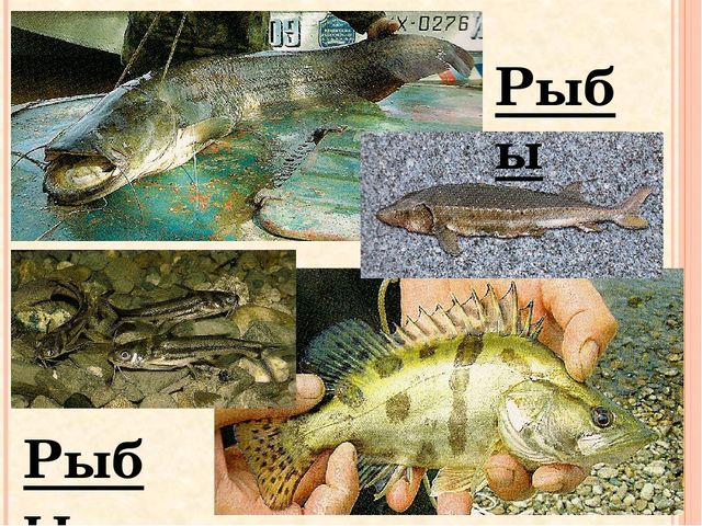 Рыбы Рыбы