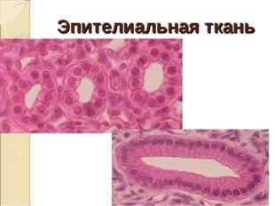 Эпителиальная ткань