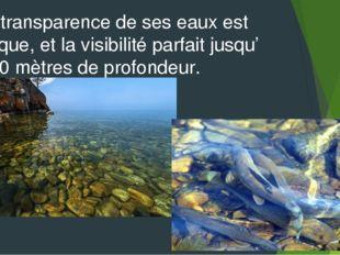 La transparence de ses eaux est unique, et la visibilité parfait jusqu' à 40