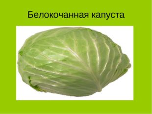 Белокочанная капуста