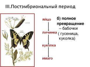 б) полное превращение – бабочки ( гусеница, куколка)
