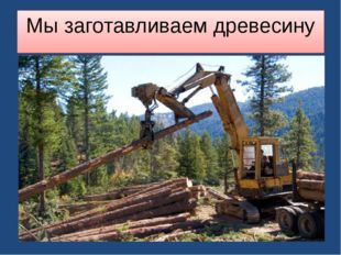 Мы заготавливаем древесину