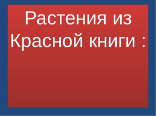 Растения из Красной книги :