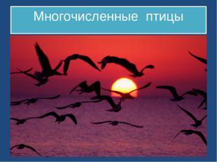 Многочисленные птицы