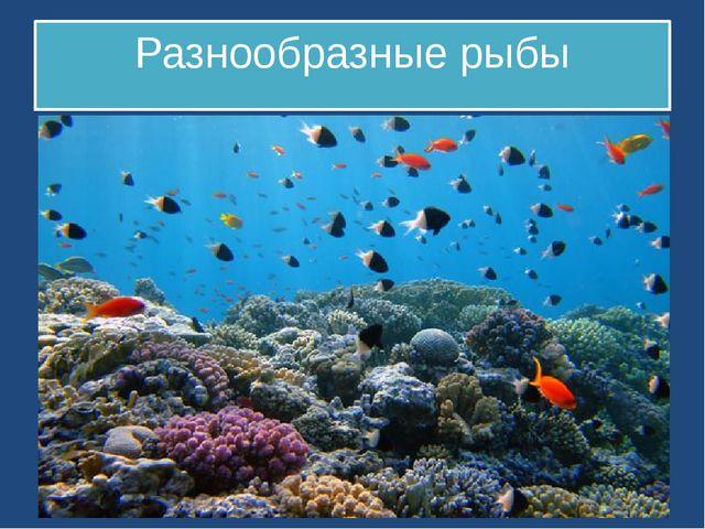 Разнообразные рыбы