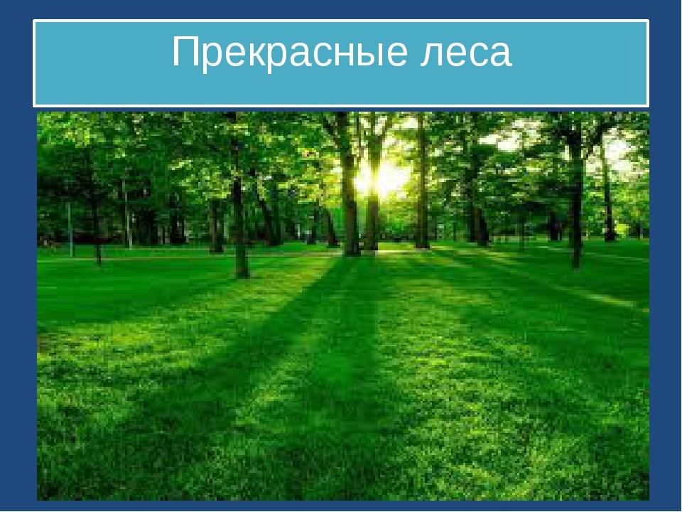 Прекрасные леса