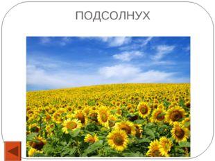 15 Каким фруктом отравили царевну в сказке Пушкина «О мертвой царевне и семи